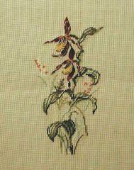 MR 2332 mf Frauenschuh Orchidee