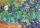 1059 TT Iris / van Gogh 65x46 cm